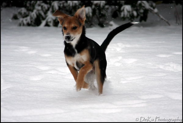 Moki-Snow(web)_0011
