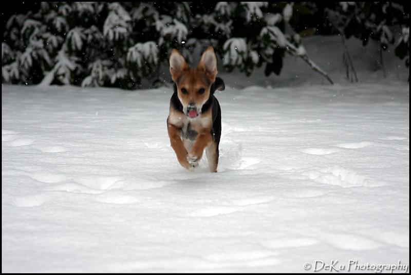 Moki-Snow(web)_0010