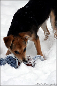 Moki-Snow(web)_0019