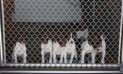 Casa de puppies.