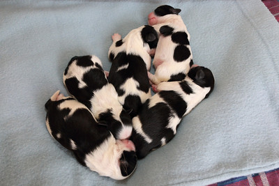 Molly's Puppies