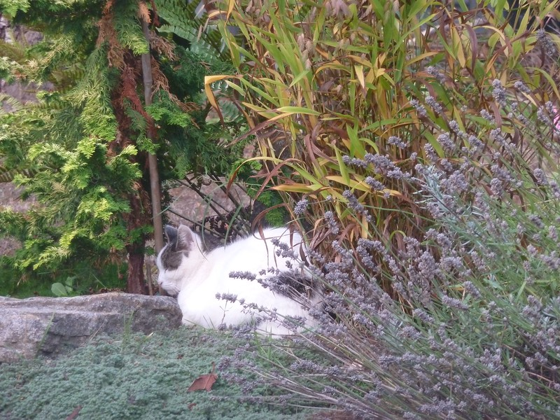 Montana takes a morning nap in the flower bed_01
