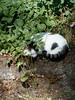 cat_sleep_wall_2