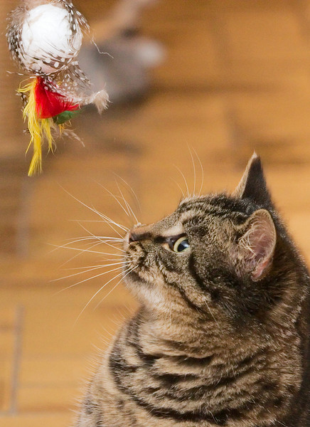 Oh yes!  A ball with feathers on an elastic band, just made to catch and play with!