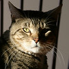 "Snickers in shadow<br /> ""The cat"""