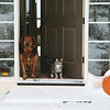 "Goodbye for now and Merry Christmas from Cinnamon and Snickers!<br /> Snow on the pumpkin<br /> ""Welcome Home"""