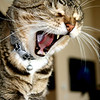 """Looks like I need a nap..<br /> What do you think...<br /> Life is difficult when you're the """"fat cat"""""""