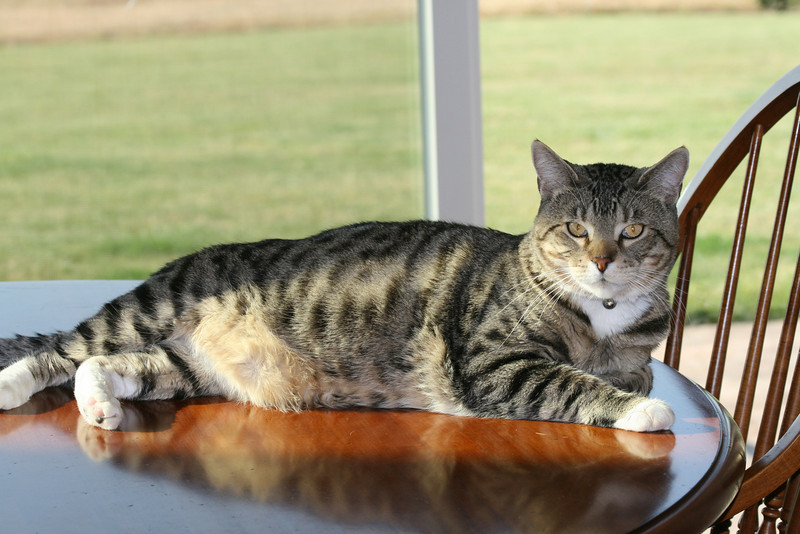 """I'm a fine looking beastie!<br /> Snicker's in his favorite spot!<br /> """"The Cat"""""""