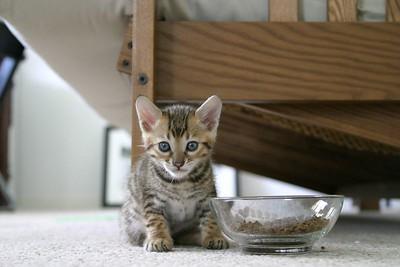 Mr. T, the kitten