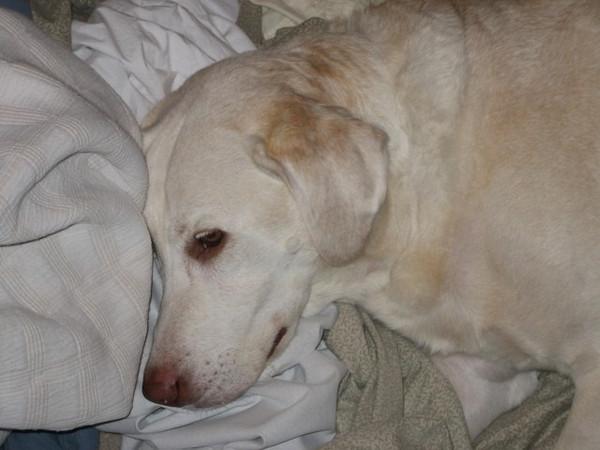 Tired Murphy - January 28, 2007