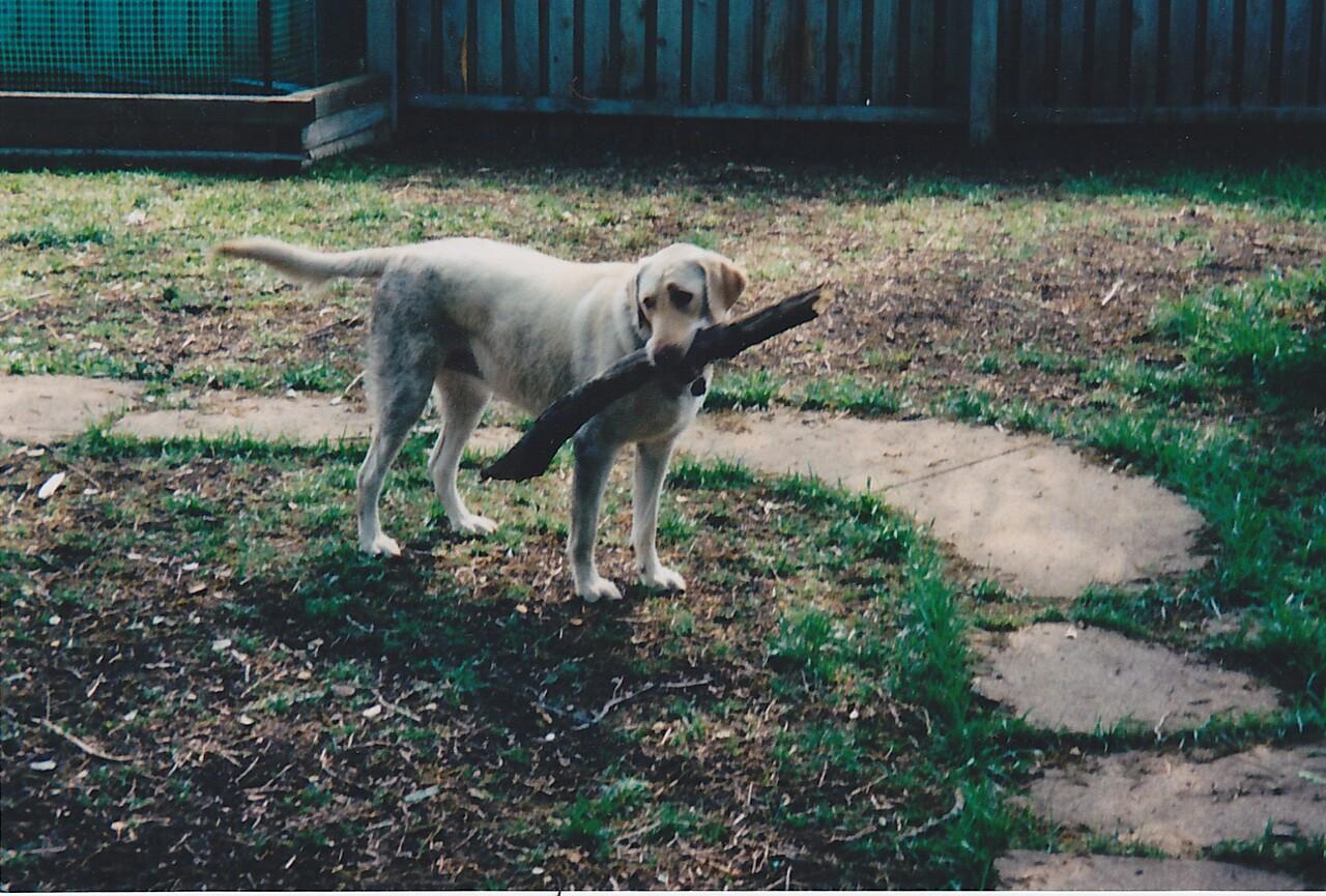 Anybody for fetch? Girls rule!