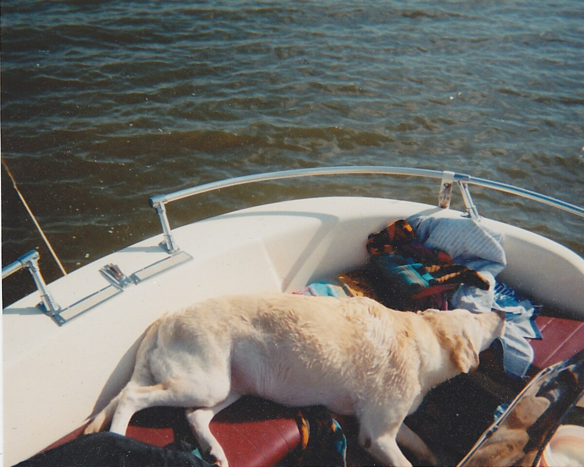 Murphy crashed out on the boat after some swimming