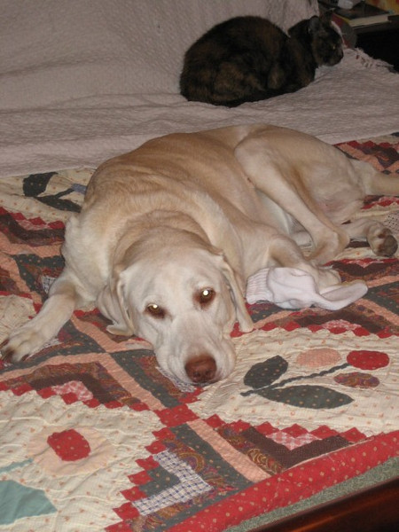 Murphy and Speck chillin' - September 25, 2006