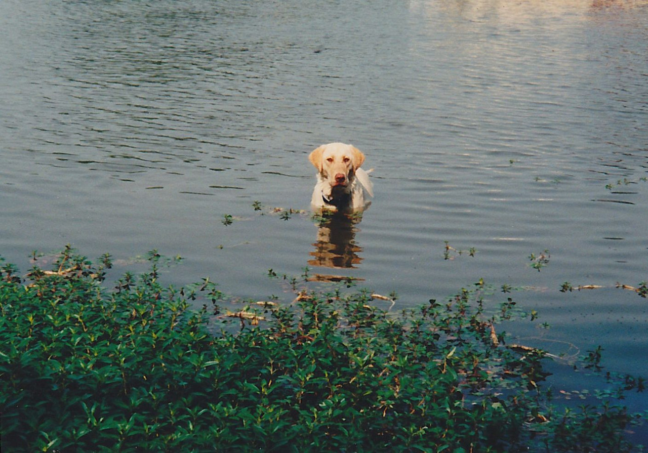 Murphy in the water at Lake Bonham - Her Happy Place