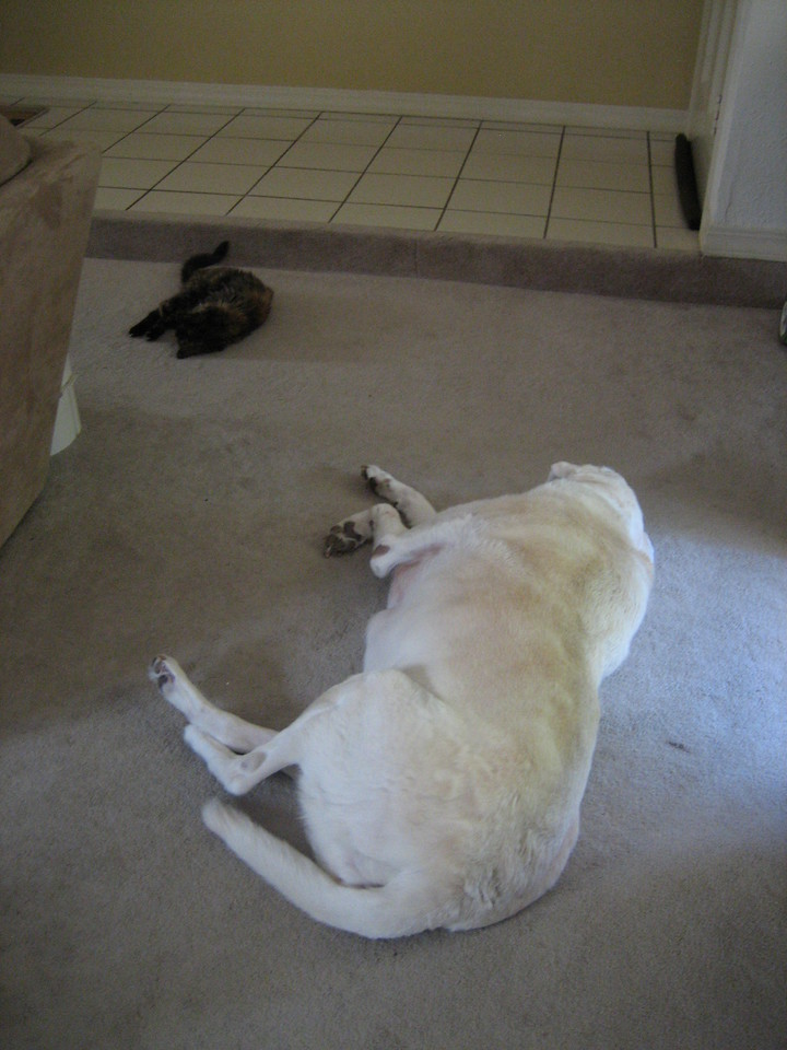 Murphy and Speck doing what they did best - September 6, 2010