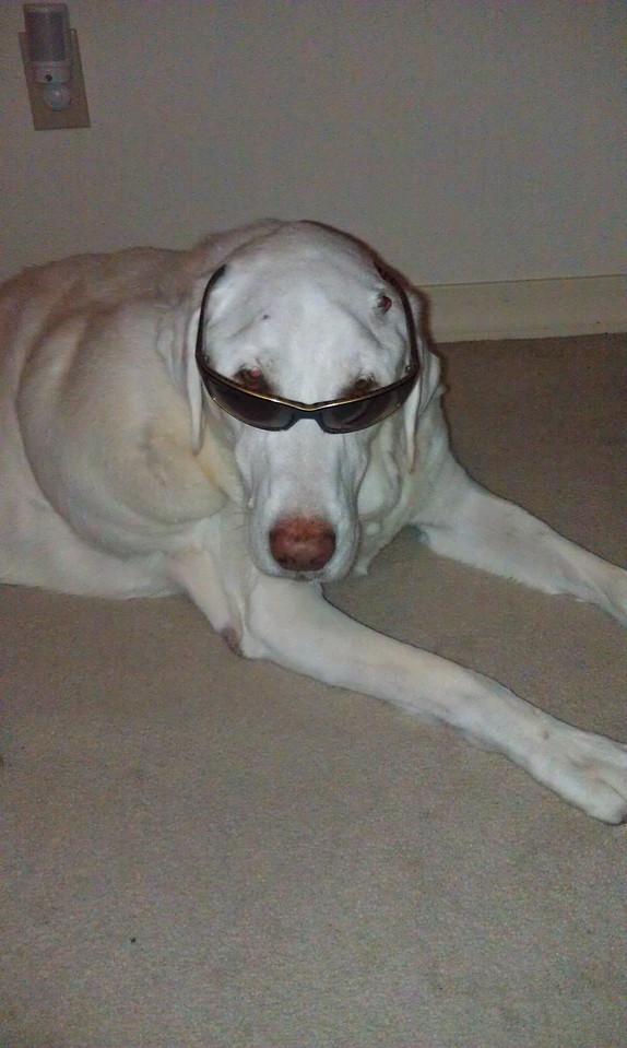 My future's so bright, I gotta wear shades. December 24, 2011