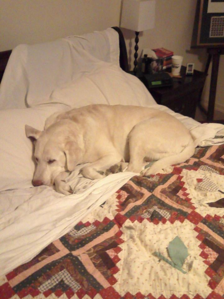 Snug on the bed - December 3, 2007