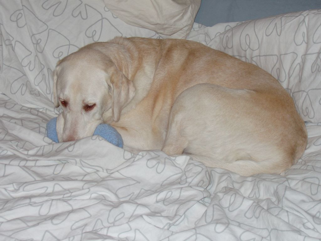 Murphy on the bed with a freshly washed pair of socks - February 6, 2007