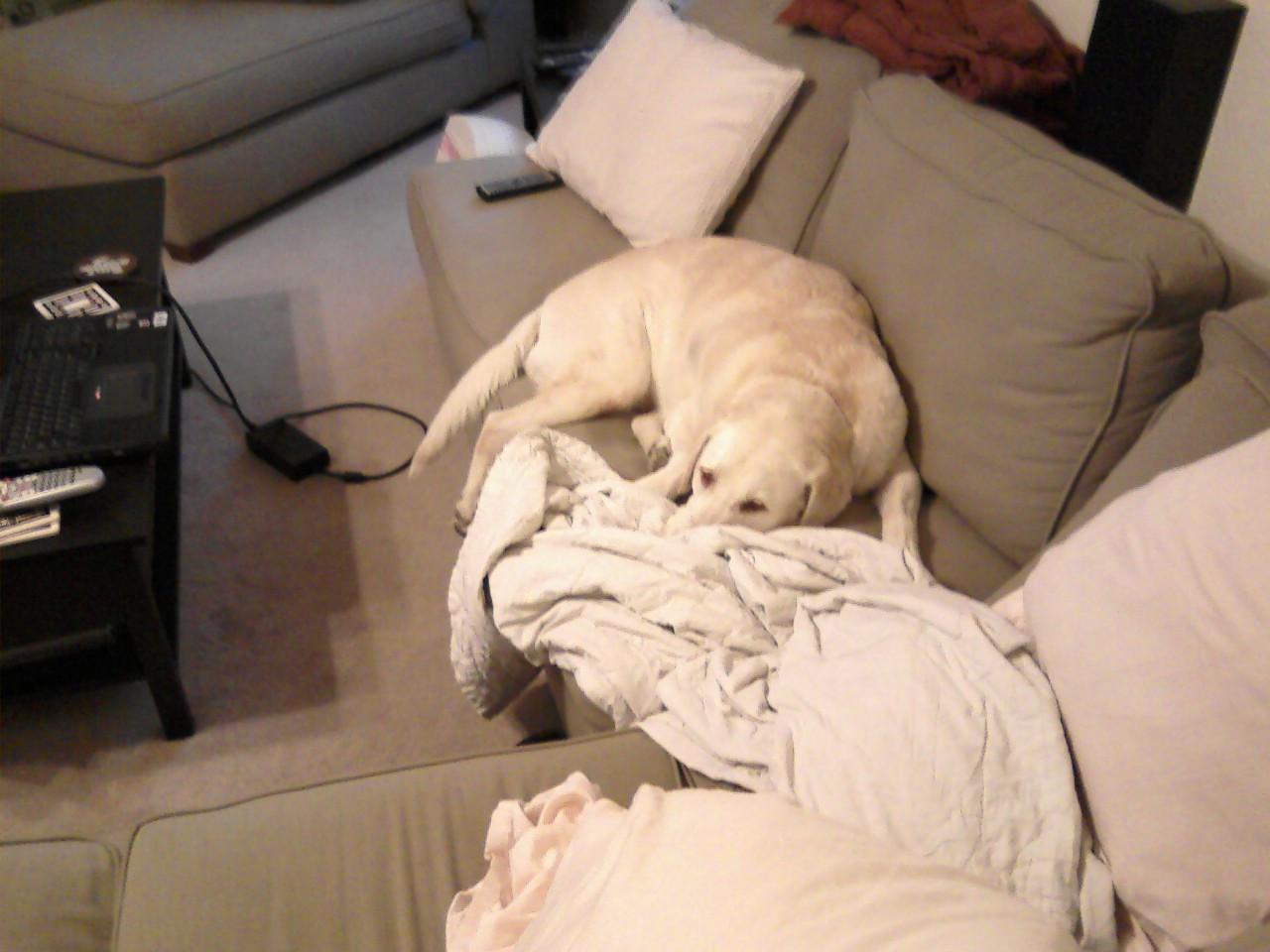 Murphy - couch potato? - November 16, 2007