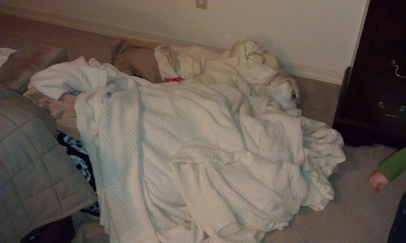 Murphy covered up with pilows, blankets, and sheets by Laney. She did not even care. She was such a good dog for Laney.