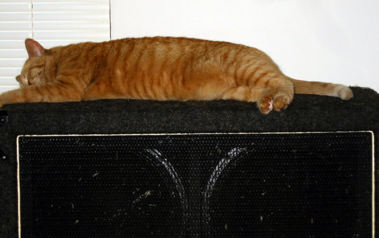 Sleeping on my guitar speaker cabinet. Obviously I'm not playing.
