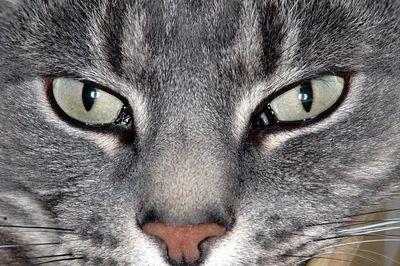 My Cat (Tiger)