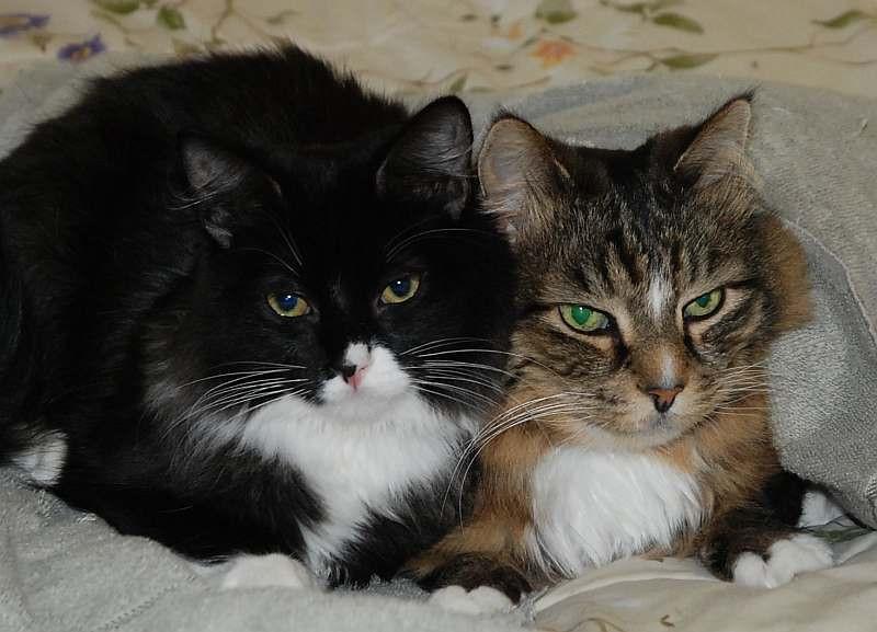 Felix and Sebastian - mamma's boys.