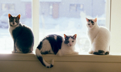 Three Cats on a Wall