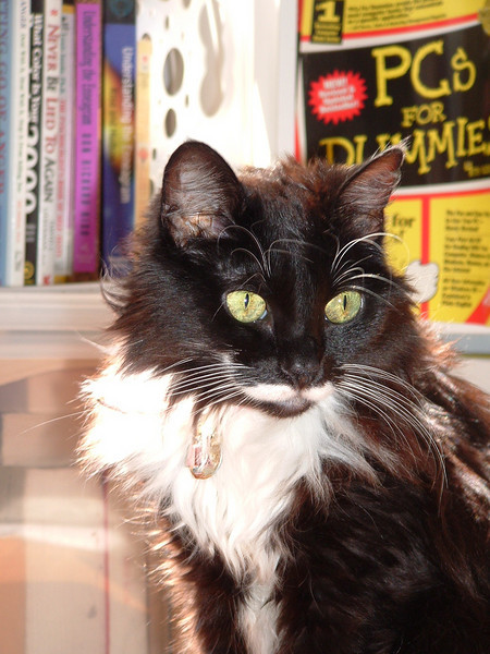 Sabrina (Jul 1, 1998 - Dec 17, 2008), the kitty love of my life. Miss her sooo much...