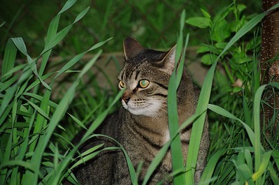 Gus in the grass