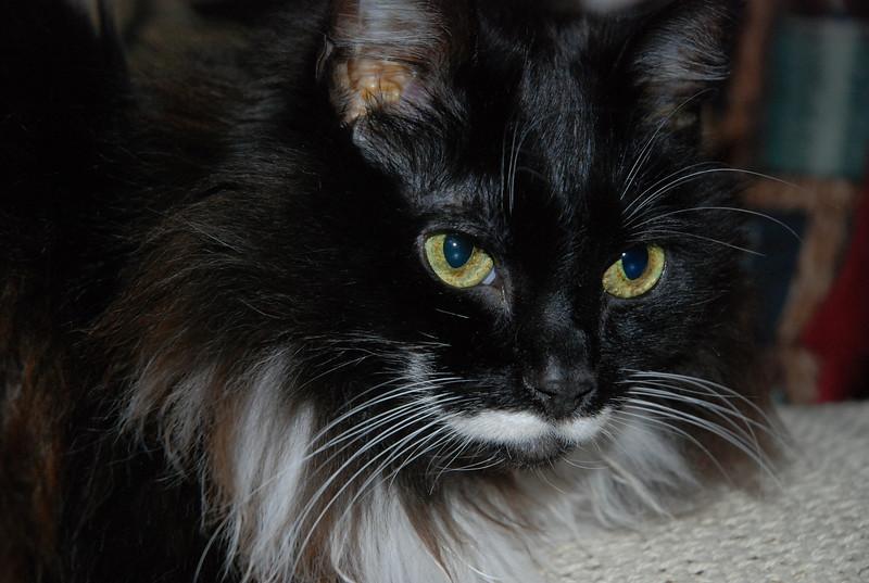 Sabrina's yellow eyes...