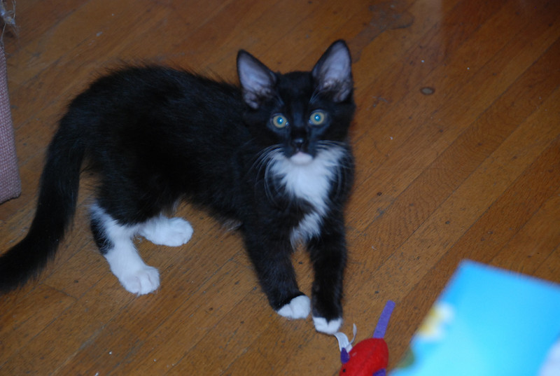 Moxie came to live with us when she was 9 weeks old - Sept 2009.