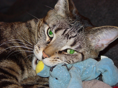 This is 2006 when we found his long lost 'boo'.  He was so happy when we located it, even though he outgrew it just a bit.