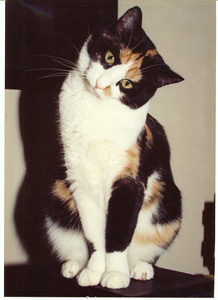 Oh, Snicker.  You were something special.  She died on Sept 21, 1999 at noon.  Lil' Bit was born the same day at 1pm.  It was fate.