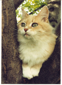 Sasha.  The most beautiful cat we ever had...and she knew it.