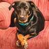 Thankful<br /> My Fräulein sitting pretty for her Thanksgiving photo.