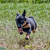 Super dog<br /> Super dog to the rescue. Flying through the air with ease!
