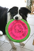 Jessie the frisbee queen