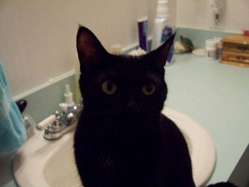 Here she is, on the bathroom sink countertop.