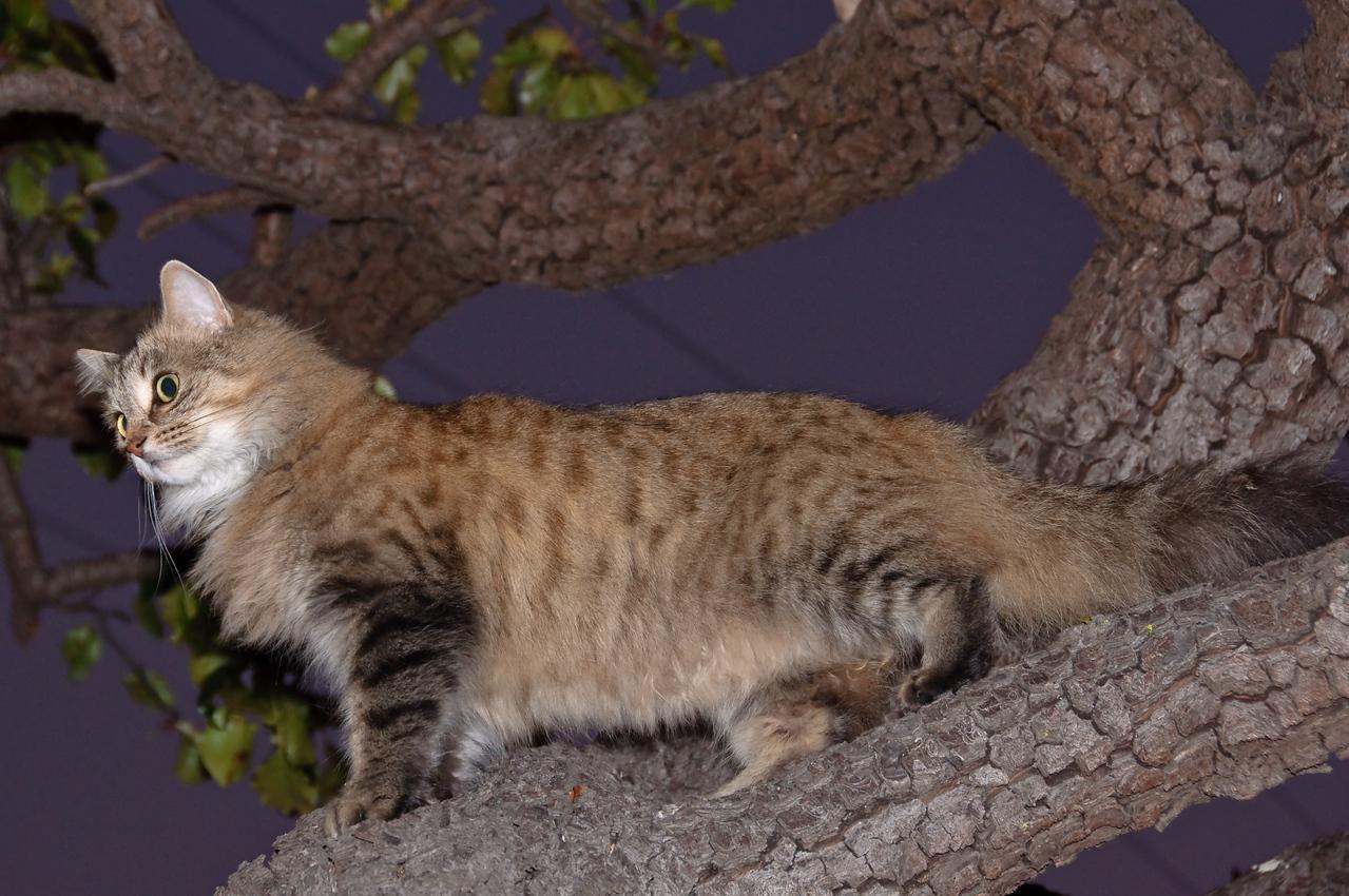 2008-11-21 Kitty Witty