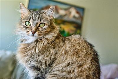 kitty witty popped_DSC7914
