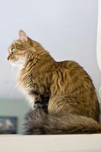 2008-10-10 Kitty Witty-0228