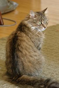 09-09-2008 Kitty Witty-7951