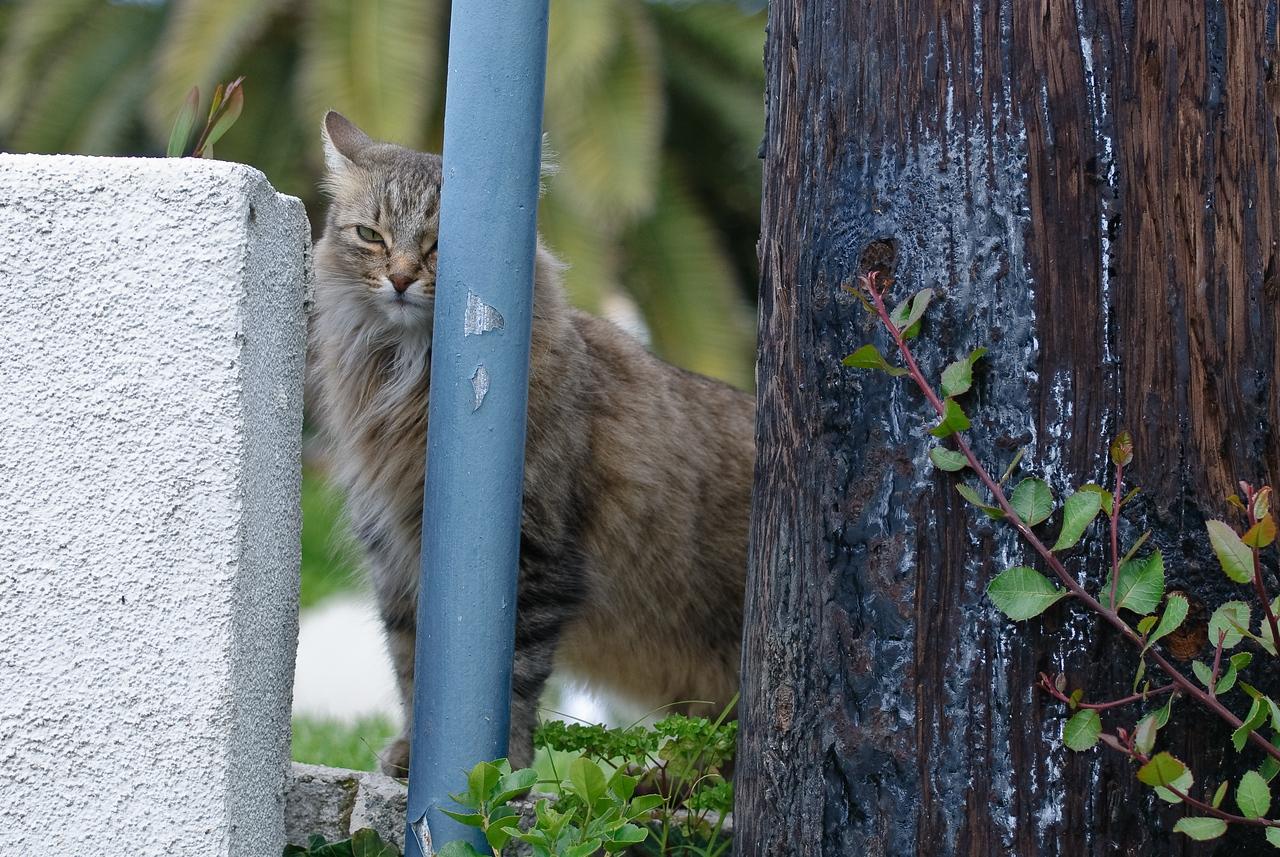 2008-06-03 cats-6718