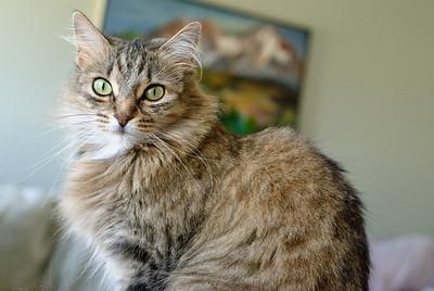 09-09-2008 Kitty Witty-7914