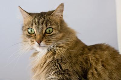 2008-10-10 Kitty Witty-0227