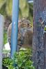 2008-06-03 kitty witty-6719