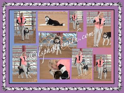 Husky requested photos