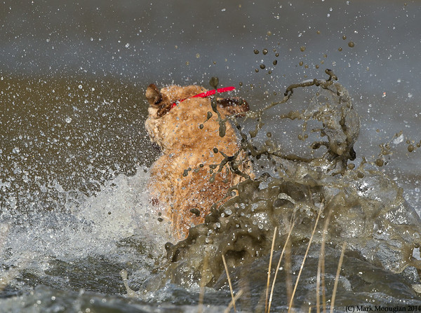 Mac! Mud and water flying under Chessie power!