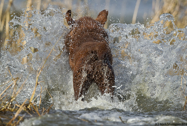 Charlie! A big splash from the Master Hunter!